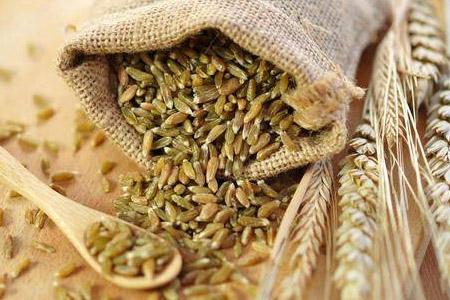 Cereale și plante furajere